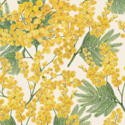 Papel Mimose